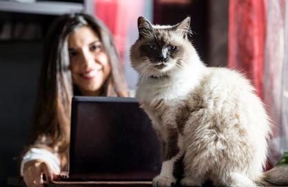 Bogáncs Állatorvosi Rendelő e-mail cím