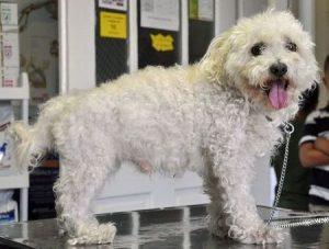 2011. augusztus 9-én találták az alábbi, középkorú szuka kutyát