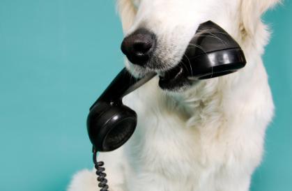Bogáncs Állatorvosi Rendelő - Telefon