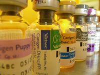 Oltások - Bogáncs Állatorvosi Rendelő