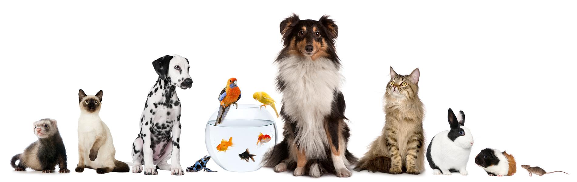 Bogáncs Állatorvosi Rendelő