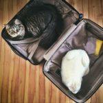 Az állatútlevél bármilyen életkorban kiállítható